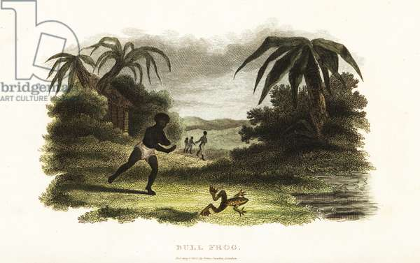 Native American man losing a race with a bull frog to a pond, 18th century