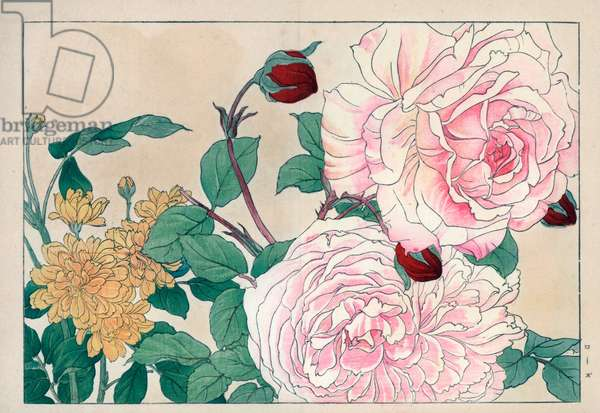 """Variety of roses (yellow and pink colors and crimson red flower buds). Roses, Rosa species. Handcoloured woodblock print from Konan Tanigami's """""""" Seiyou Sokazufu"""""""" (Pictorial Album of Western Plants and Flowers: Spring), Unsodo, Kyoto, 1917. Tanigami (1879-1928) depicted 125 varieties of garden plants through the four seasons."""