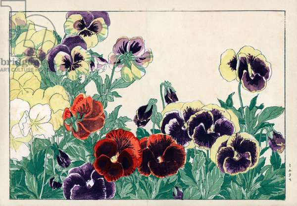 """Mimules, or monkey flower or musk flower. Mimulus, monkey flower or musk flower. Handcoloured woodblock print from Konan Tanigami's """""""" Seiyou Sokazufu"""""""" (Pictorial Album of Western Plants and Flowers: Spring), Unsodo, Kyoto, 1917. Tanigami (1879-1928) depicted 125 varieties of garden plants through the four seasons."""
