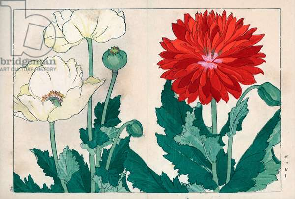 """Red and white poppies (or culvert). Poppy varieties, Papaver rhoeas. Handcoloured woodblock print from Konan Tanigami's """""""" Seiyou Sokazufu"""""""" (Pictorial Album of Western Plants and Flowers: Spring), Unsodo, Kyoto, 1917. Tanigami (1879-1928) depicted 125 varieties of garden plants through the four seasons."""