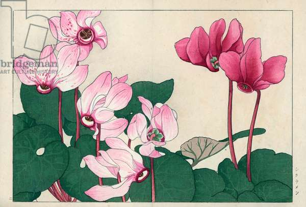 """Cyclamen, pink. Cyclamen, Cyclamen persicum. Handcoloured woodblock print from Konan Tanigami's """""""" Seiyou Sokazufu"""""""" (Pictorial Album of Western Plants and Flowers: Spring), Unsodo, Kyoto, 1917. Tanigami (1879-1928) depicted 125 varieties of garden plants through the four seasons."""