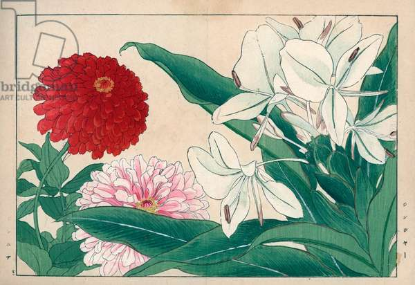 """Ginger and Zinnia elegant. Ginger, Zingiber officinale, and common zinnia, Zinnia elegans. Handcoloured woodblock print from Konan Tanigami's """""""" Seiyou Sokazufu"""""""" (Pictorial Album of Western Plants and Flowers: Summer), Unsodo, Kyoto, 1917. Tanigami (1879-1928) depicted 125 varieties of garden plants through the four seasons."""