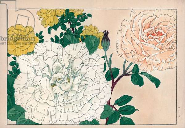 """Variety of roses (white, yellow and pale blond color). Roses, Rosa species. Handcoloured woodblock print from Konan Tanigami's """""""" Seiyou Sokazufu"""""""" (Pictorial Album of Western Plants and Flowers: Spring), Unsodo, Kyoto, 1917. Tanigami (1879-1928) depicted 125 varieties of garden plants through the four seasons."""