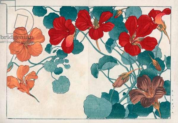 "Big capuchin. Nasturtium, Tropaeolum majus. Handcoloured woodblock print from Konan Tanigami's """" Seiyou Sokazufu"""" (Pictorial Album of Western Plants and Flowers: Summer), Unsodo, Kyoto, 1917. Tanigami (1879-1928) depicted 125 varieties of garden plants through the four seasons."