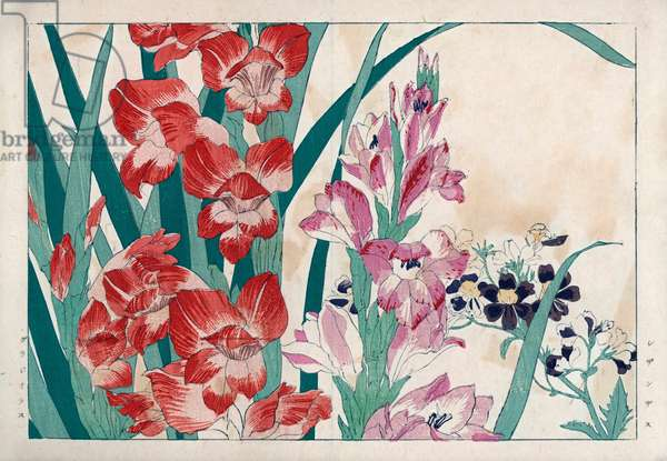 """The orchid of the poor and sword. Poor man's orchid, Schizanthus pinnatus, and gladiolus, Gladiolus communis. Handcoloured woodblock print from Konan Tanigami's """""""" Seiyou Sokazufu"""""""" (Pictorial Album of Western Plants and Flowers: Summer), Unsodo, Kyoto, 1917. Tanigami (1879-1928) depicted 125 varieties of garden plants through the four seasons."""