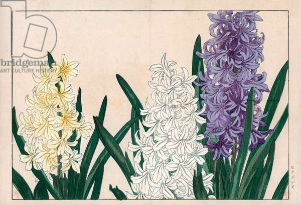 """Oriental hyacinth, white and blue flowering. Hyacinth, Hyacinthus orientalis. Handcoloured woodblock print from Konan Tanigami's """""""" Seiyou Sokazufu"""""""" (Pictorial Album of Western Plants and Flowers: Spring), Unsodo, Kyoto, 1917. Tanigami (1879-1928) depicted 125 varieties of garden plants through the four seasons."""