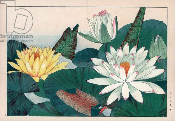 """Nenuphar (nenufar or nymphea), white and yellow. White and yellow waterlilies, Nymphaea alba and Nymphaea mexicana. Handcoloured woodblock print from Konan Tanigami's """""""" Seiyou Sokazufu"""""""" (Pictorial Album of Western Plants and Flowers: Summer), Unsodo, Kyoto, 1917. Tanigami (1879-1928) depicted 125 varieties of garden plants through the four seasons."""
