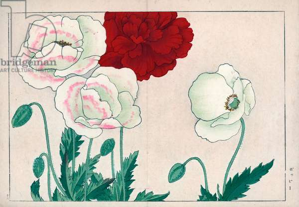 """Variety of poppies. Poppy varieties, Papaver. Handcoloured woodblock print from Konan Tanigami's """""""" Seiyou Sokazufu"""""""" (Pictorial Album of Western Plants and Flowers: Spring), Unsodo, Kyoto, 1917. Tanigami (1879-1928) depicted 125 varieties of garden plants through the four seasons."""