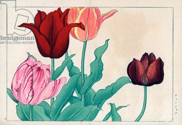 """Variety of tulips, in various colors from pink to dark purple. Tulips, Tulipa gesneriana. Handcoloured woodblock print from Konan Tanigami's """""""" Seiyou Sokazufu"""""""" (Pictorial Album of Western Plants and Flowers: Spring), Unsodo, Kyoto, 1917. Tanigami (1879-1928) depicted 125 varieties of garden plants through the four seasons."""