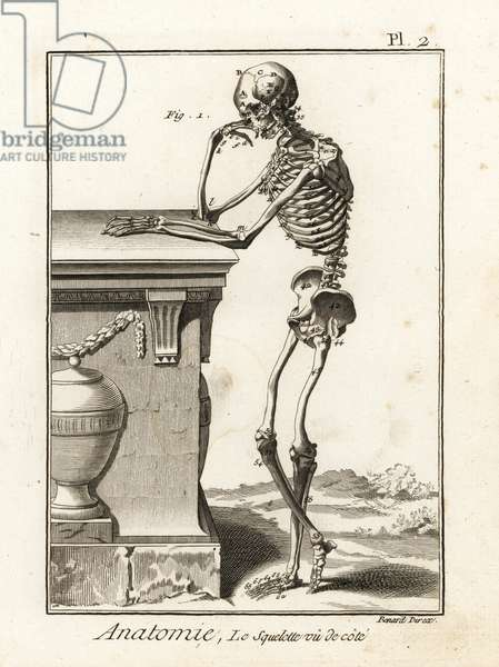 Human skeleton viewed from the side. Copperplate engraving by Robert Benard after an illustration by Andreas Vesalius from Denis Diderot's Encyclopedia, Pellet, Geneva, 1779.