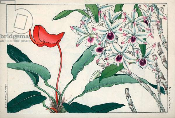 """Orchid dendrobium and red Anthurium. Dendrobium orchid and flamingo flower, Anthurium. Handcoloured woodblock print from Konan Tanigami's """""""" Seiyou Sokazufu"""""""" (Pictorial Album of Western Plants and Flowers: Autumn Winter), Unsodo, Kyoto, 1917. Tanigami (1879-1928) depicted 125 varieties of garden plants through the four seasons."""