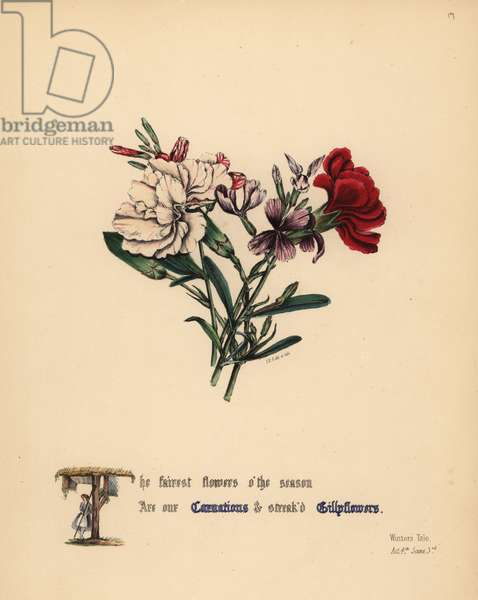 Carnations and Gilly flowers (Winter's Tale). Handcoioured botanical illustration drawn and lithographed by Jane Elizabeth Giraud from The Flowers of Shakespeare, Day and Haghe, London, 1845.