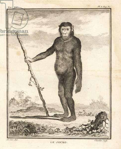 Chimpanzee, Pan troglodytes. The Jocko. Endangered. Copperplate engraving by Chevillet after an illustration by Jacques de Seve from Georges-Louis Leclerc, Comte de Buffon's Histoire Naturelle, Imprimerie Royale, Paris, 1766.
