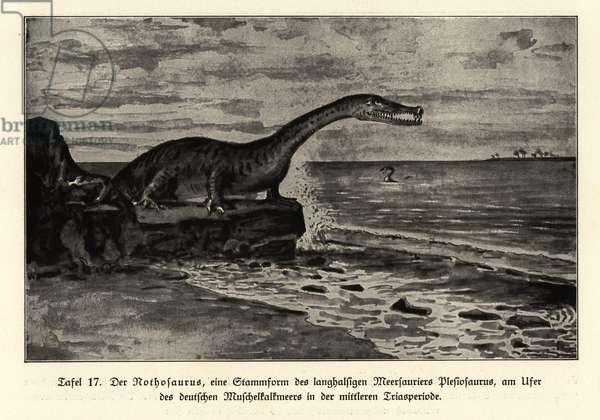 Extinct Nothosaurus, mid-Triassic period.