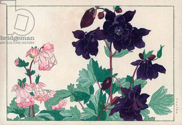 """Common ancolia, blue and pink varietes. Columbine, Aquilegia vulgaris. Handcoloured woodblock print from Konan Tanigami's """""""" Seiyou Sokazufu"""""""" (Pictorial Album of Western Plants and Flowers: Spring), Unsodo, Kyoto, 1917. Tanigami (1879-1928) depicted 125 varieties of garden plants through the four seasons."""