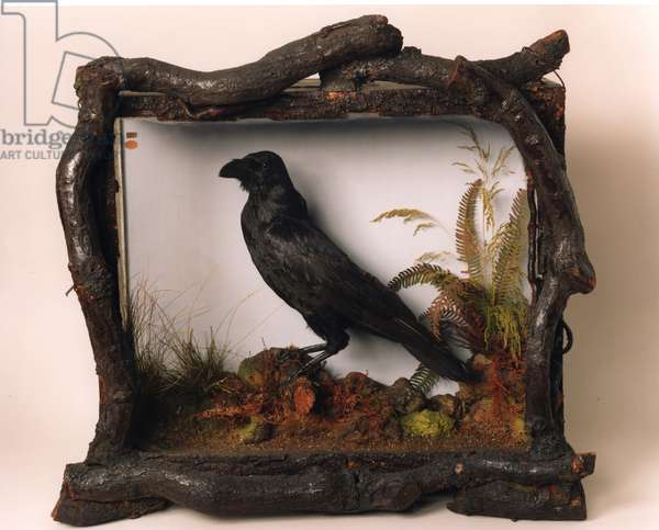 Grip, the pet raven of Charles Dickens (photo)