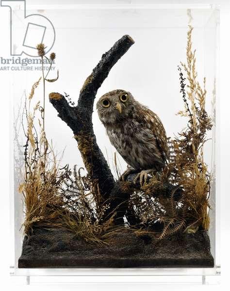 Athena, Florence Nightingale's stuffed pet owl (photo) (see also 321966)