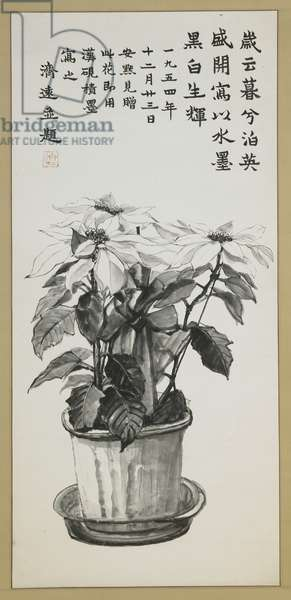 Poinsettias, 1954 (ink on paper)