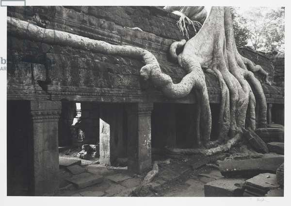 Angkor #158, Cambodia (Temple of 'Ta Prohm'), 1996 (platinum print)
