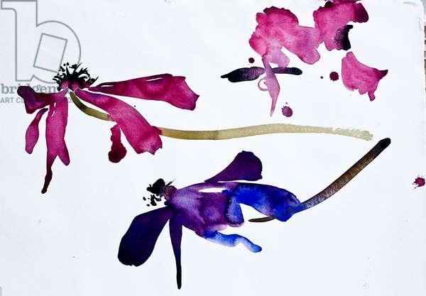 Anemones (w/c on paper)