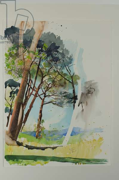 Pines at St. Blaise, 2004 (w/c on paper)