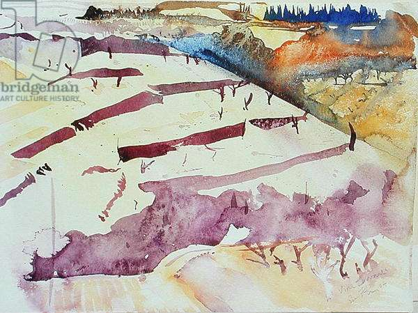 Vine Terraces, 2004 (w/c on paper)