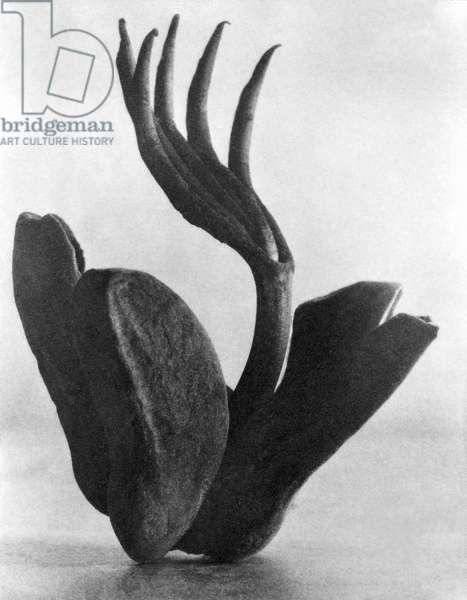Flor de Manita, Mexico City, 1925 (b/w photo)
