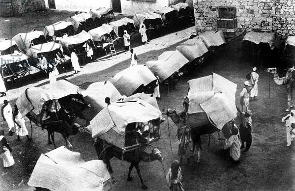 MECCA: PILGRIMS, c.1910 Camels and tents of pilgrims in Mecca, Saudi Arabia. Photograph, c.1910.