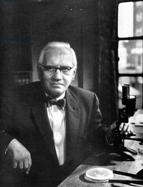 SIR ALEXANDER FLEMING (1881-1955). Scottish bacteriologist.