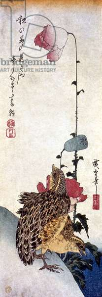 HIROSHIGE: POPPIES Poppies and Quail. Woodblock print by Ando Hiroshige, c.1835.