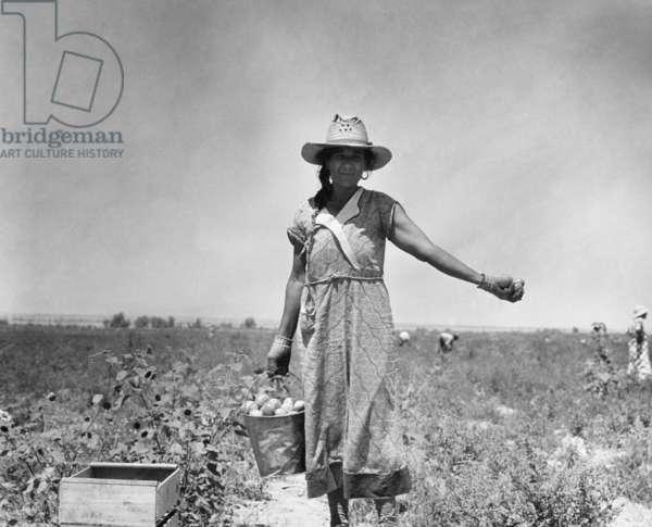 A tomato picker in the Coachella Valley, California, 1935 (b/w photo)