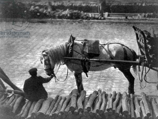 STIEGLITZ: PARIS, 1911 Man holding the reins to a horse pulling a cart in Paris, France. Photograph by Alfred Stieglitz, 1911.