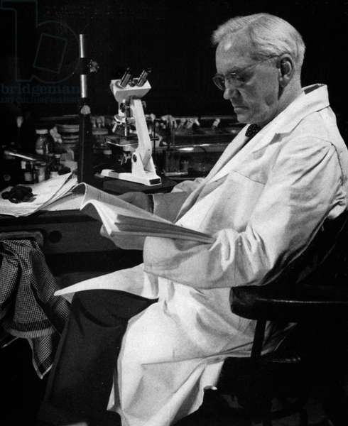 SIR ALEXANDER FLEMING (1881-1955). Scottish bacteriologist. Photographed in 1954 in his last laboratory at the Wright-Fleming Institute.