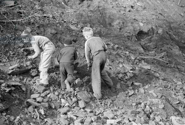 MINER STRIKE, 1939 Miner's sons collecting coal from the slag pile during a coal strike in Kempton, West Virginia. Photograph by John Vachon, May 1939.