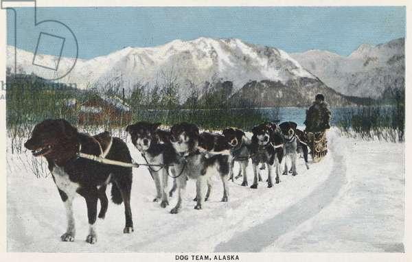 ALASKA: DOG SLED A dog sled team in Alaska. Postcard, c.1938.
