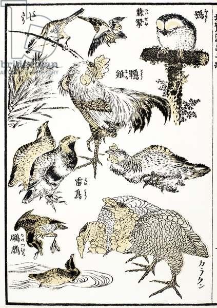 HOKUSAI: BIRDS Woodblock print from the Manga od Katsushika Hokusai, 19th century.