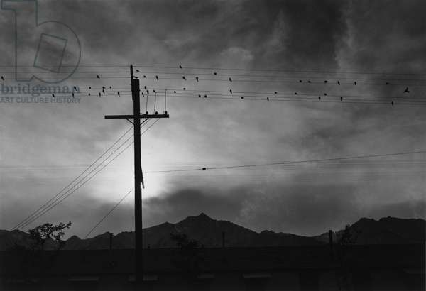 CALIFORNIA: MANZANAR, 1943 Birds on a telephone wire at the Manzanar Relocation Center in California. Photograph by Ansel Adams, 1943.