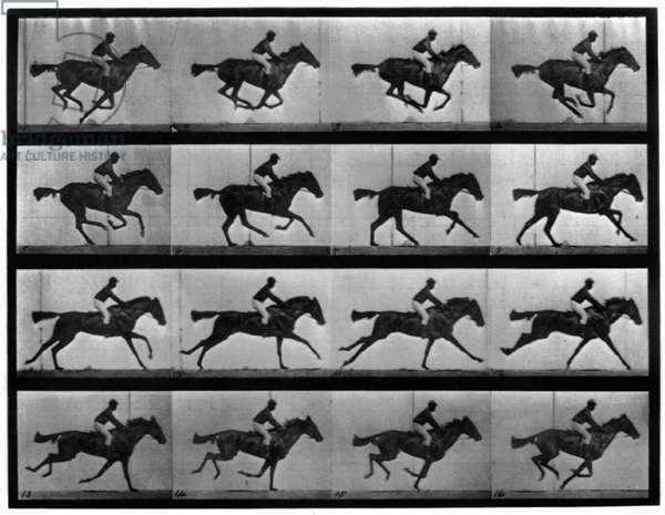 MUYBRIDGE: LOCOMOTION Photographic study of 16 frames of racehorse 'Annie G.' galloping by Eadweard Muybridge in c.1887.