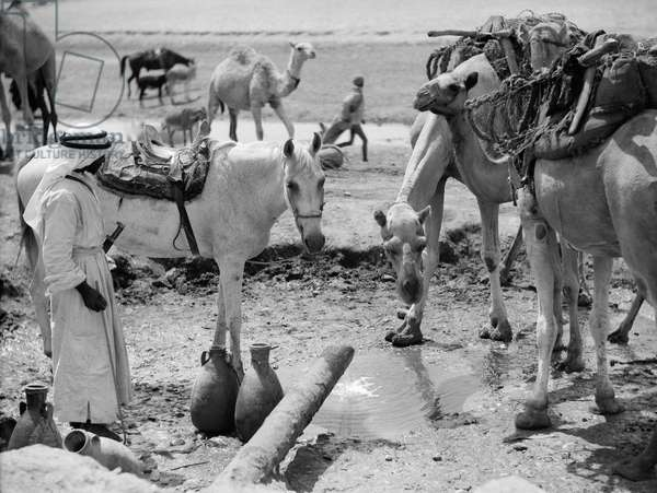 MIDDLE EAST: WATER, c.1932 A Bedouin man with a horse and camels at a water hole in the Middle East. Photograph, c.1932.