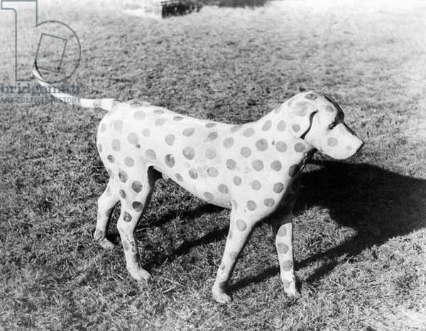 LAWN DOG, 1936 Painted lawn ornament. Photographed by Carl Van Vechten, 1936.