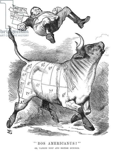 BRITISH IMPORT, 1877 'Bos Americanus!' English cartoon by Sir John Tenniel, 1877, from 'Punch' on the expected advantages of importing meat from the United States.