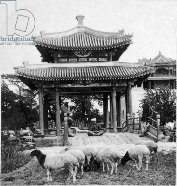 PEKING: SUMMER PALACE Indian shepherds with their flock at a pavilion on the grounds of the Summer Palace in Peking, China. Stereograph, c.1901.