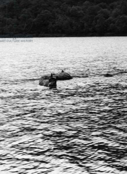 LOCH OICH HOAX, 1961 A self-propelled model of a monster, known as 'Wee Oichy,' placed as a hoax in Loch Oich, Scotland, near Loch Ness. Photographed in 1961.