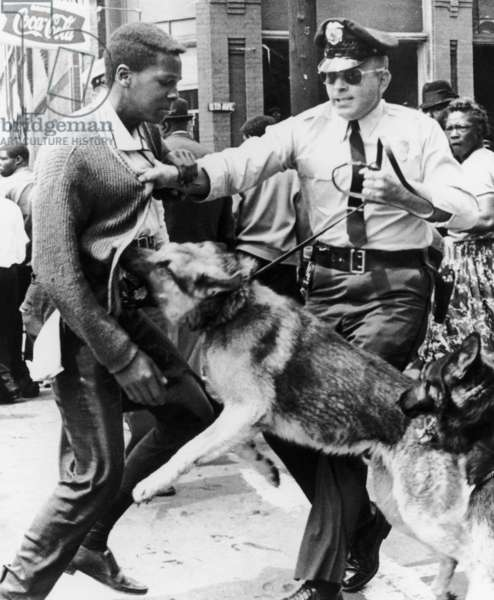 CIVIL RIGHTS, 1963 Police dog attacking a young man during the Youth Mass Demonstration in Birmingham, Alabama. Photograph, May 1963.