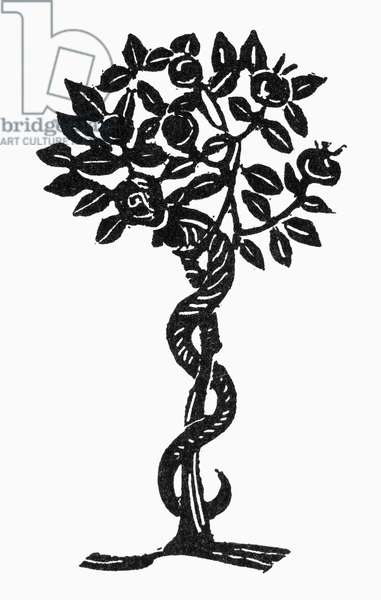 SYMBOL: TEMPTATION A serpent and apple tree, symbol of temptation. Woodcut.