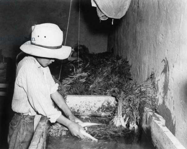 CHILD LABOR, 20th CENTURY A migrant worker boy washing carrots, probably in New Mexico. Photograph, 20th century.