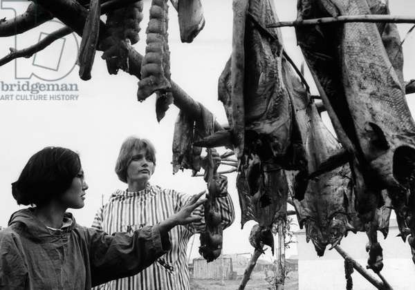 ALASKA: DRYING FISH, 1967 Women looking at salmon drying on a rack in Alaska. Photograph by Don Rutledge, c.1967.