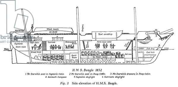 """DARWIN: H.M.S. 'BEAGLE.' Side elevation of the """"Beagle,"""" on which Charles Darwin sailed as naturalist from 1831 to 1836."""