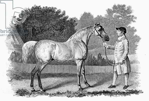 RACEHORSE: GIMCRACK, c.1765 Steel engraving, 19th century, after the painting by George Stubbs.