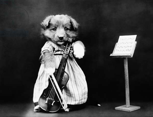 FREES: DOG, c.1914 'The fiddler.' Photograph by Harry Whittier Frees, c.1914.